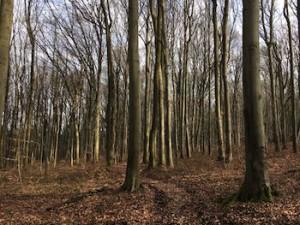 Forêt de troncs illuminés